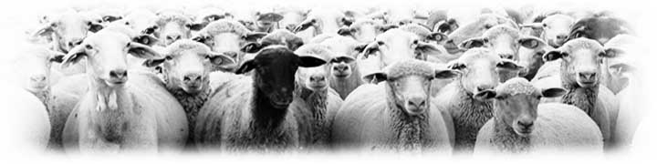 Crónicas de una oveja eléctrica